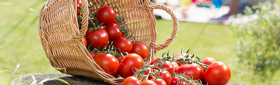 Tomaten mand